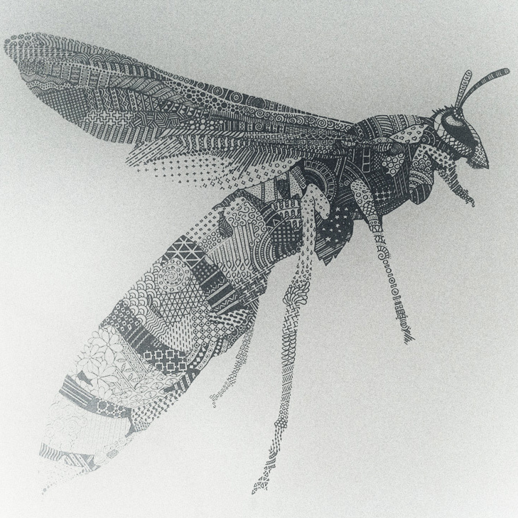 wasp-square